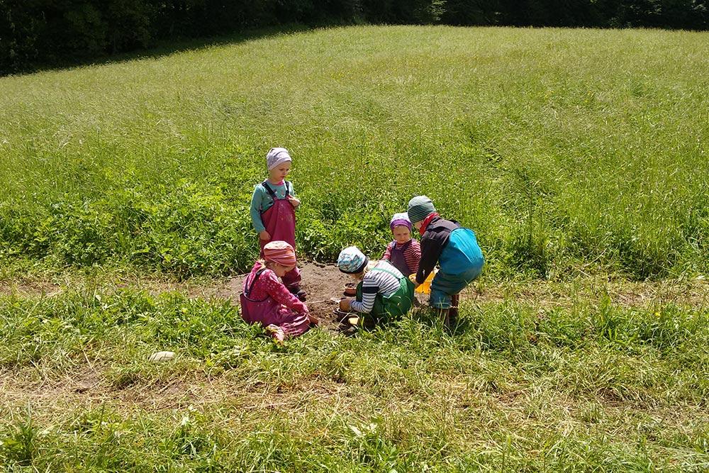 Der Waldrand bietet spannende Spielmöglichkeiten.