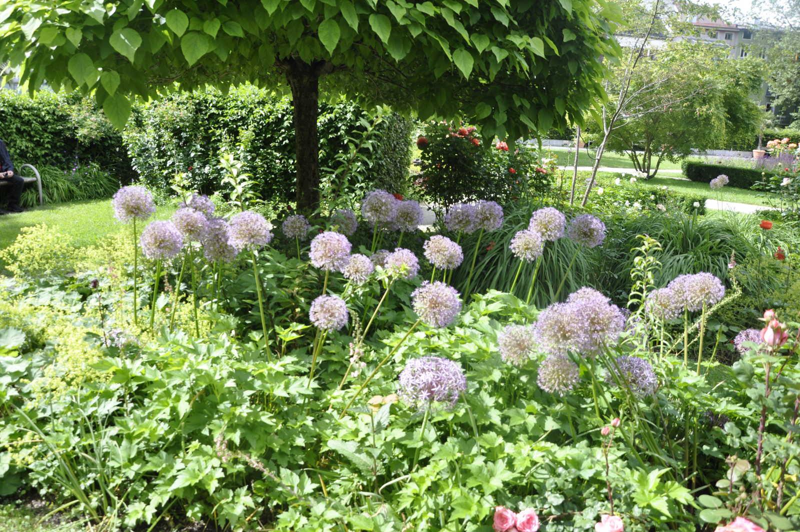 Blumenpracht im Riedergarten.